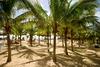 Le Toiny Beach