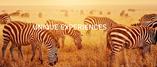 UNIQUE EXPERIENCES