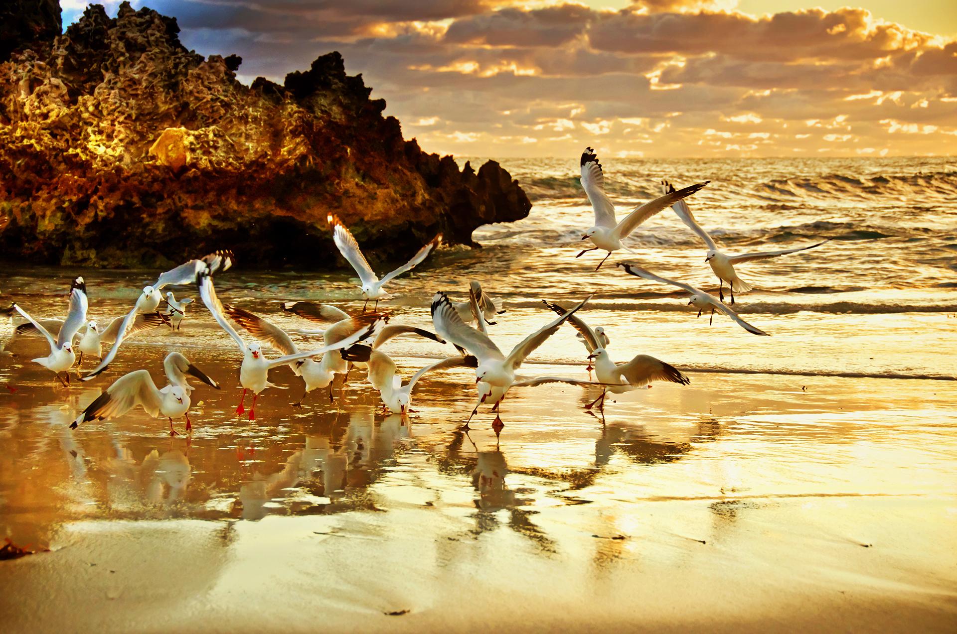 Australia Virtuoso